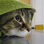 Как помочь коту в стрессе