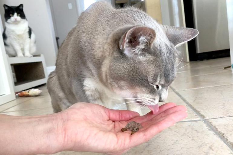 Кошка ест с руки