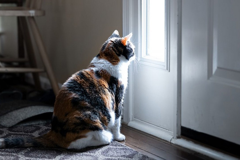 Кот хочет на улицу