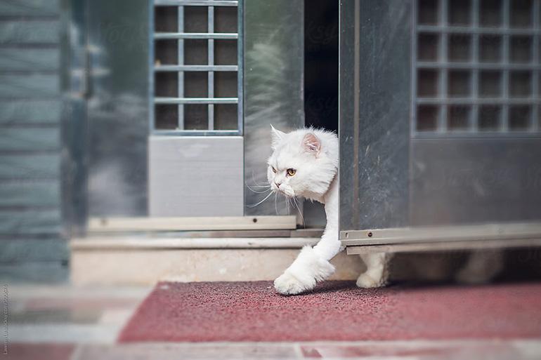 Кот выбежал из дома