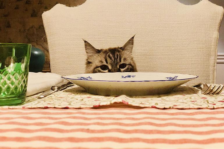 Кот смотрит на стол