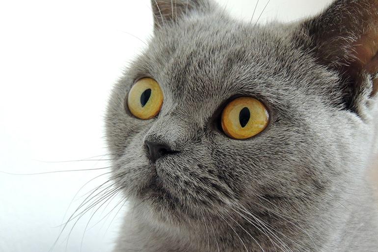 Кот взволнован