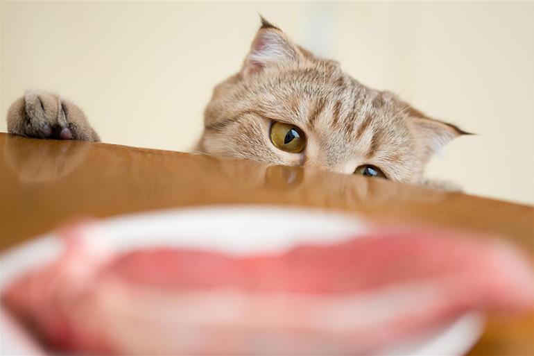 Кот хочет утащить еду со стола