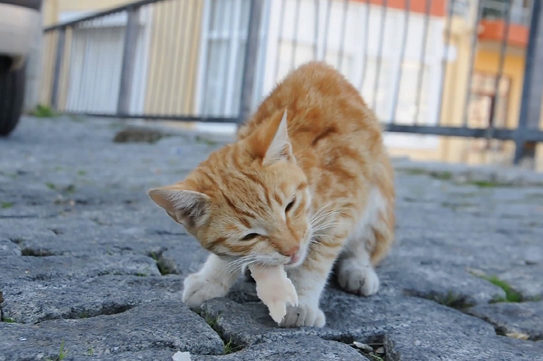 Кошка проголодалась