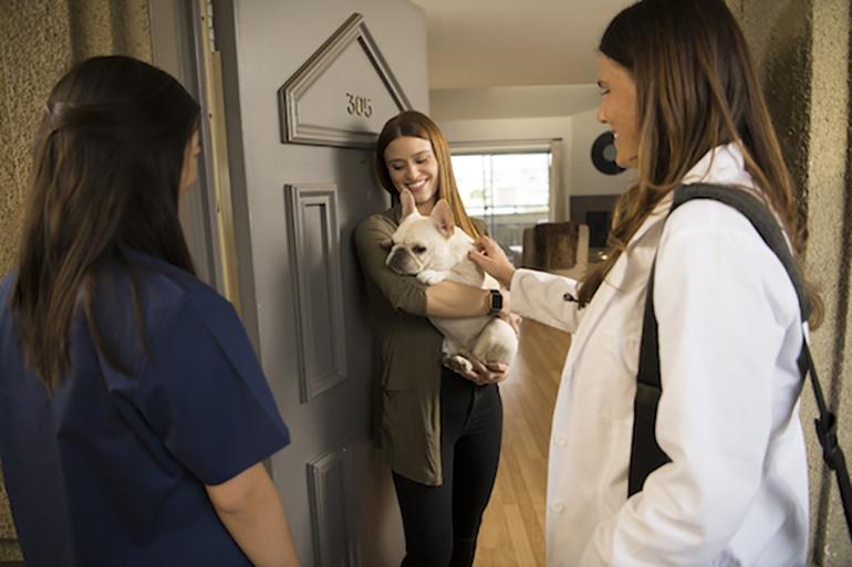 Посещение ветеринара на дому