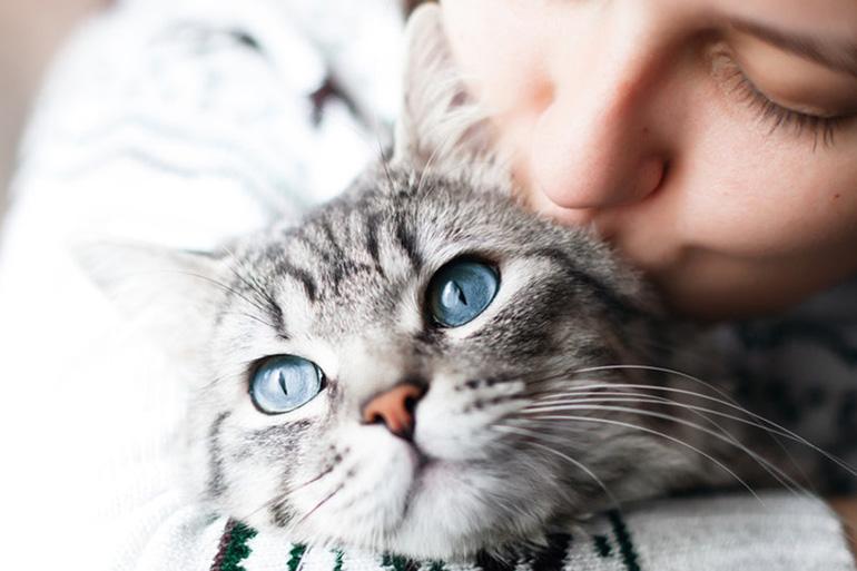 Кот нашёлся