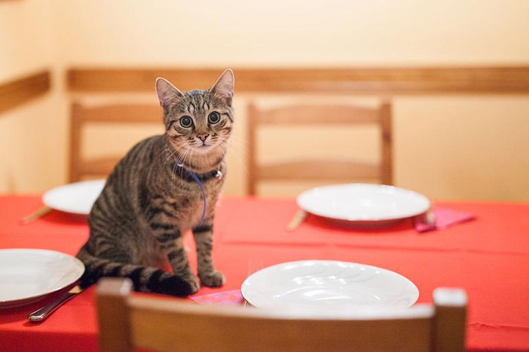 Кот ждёт еду