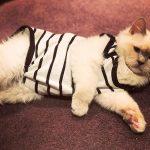 Попоны для кошек: виды, выбор и использование