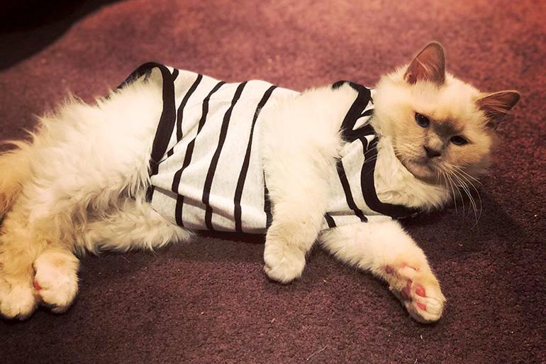 Кот в попоне