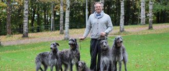 Заводчик собак