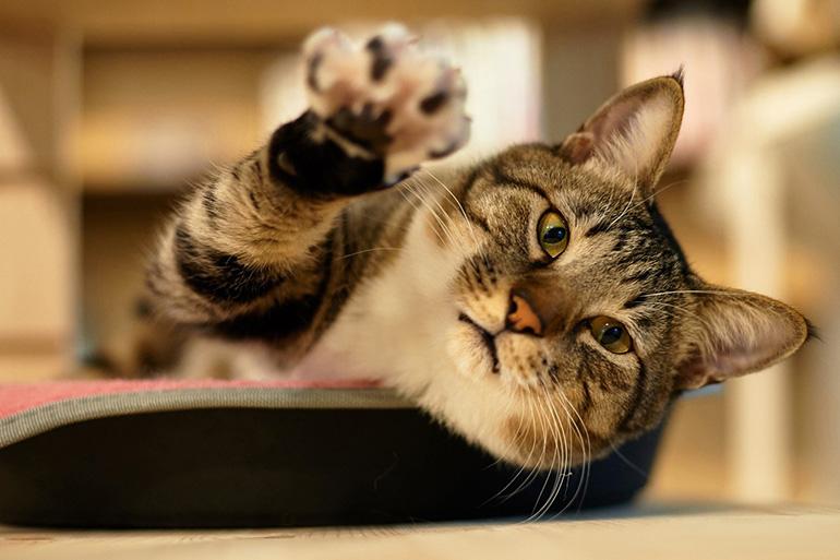 Кот тянется поцарапать что нибудь