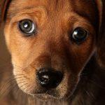 Понятие о рефлексах у собак