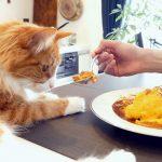 Рецепты домашней еды в рационе кошки