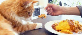 Еда для кошки приготовленная дома
