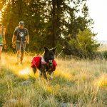 Как подготовиться к походу с собакой