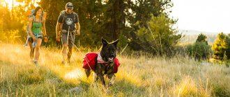 В поход с собакой