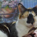 Основные правила ухода за слепой кошкой