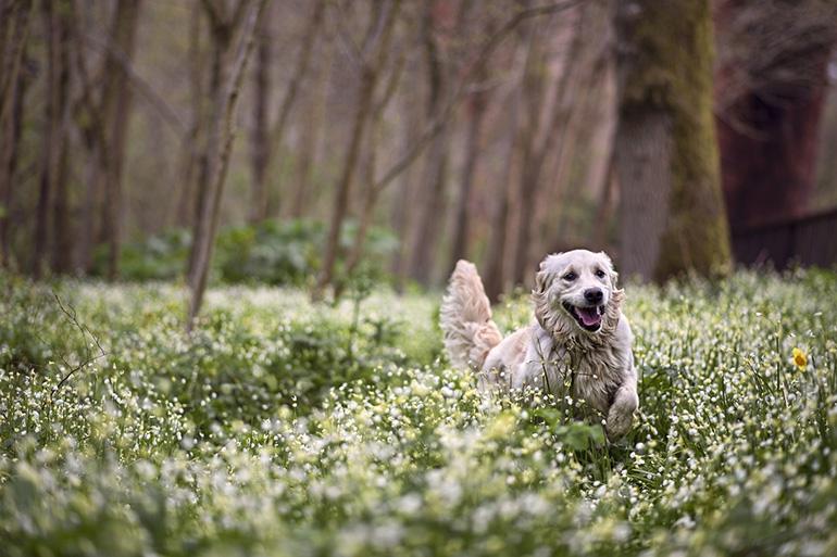 Собака на поляне