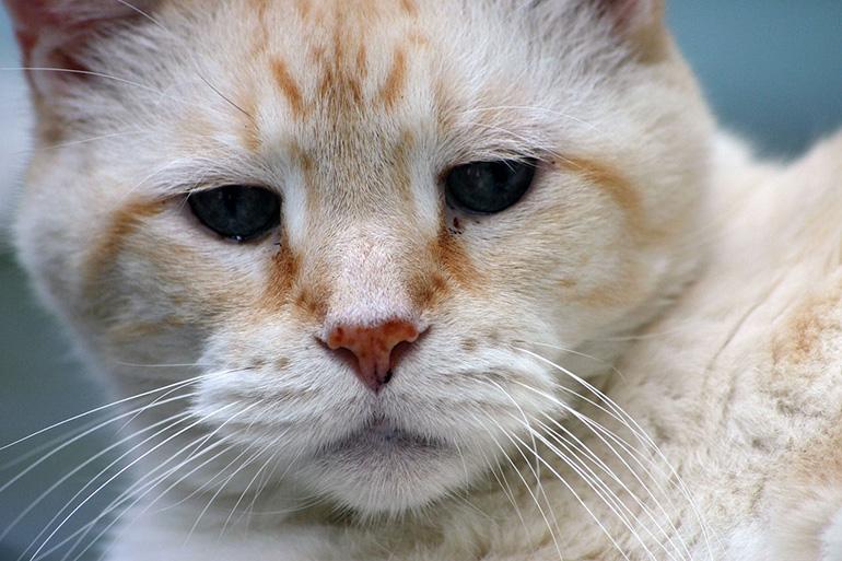 Старенький кот