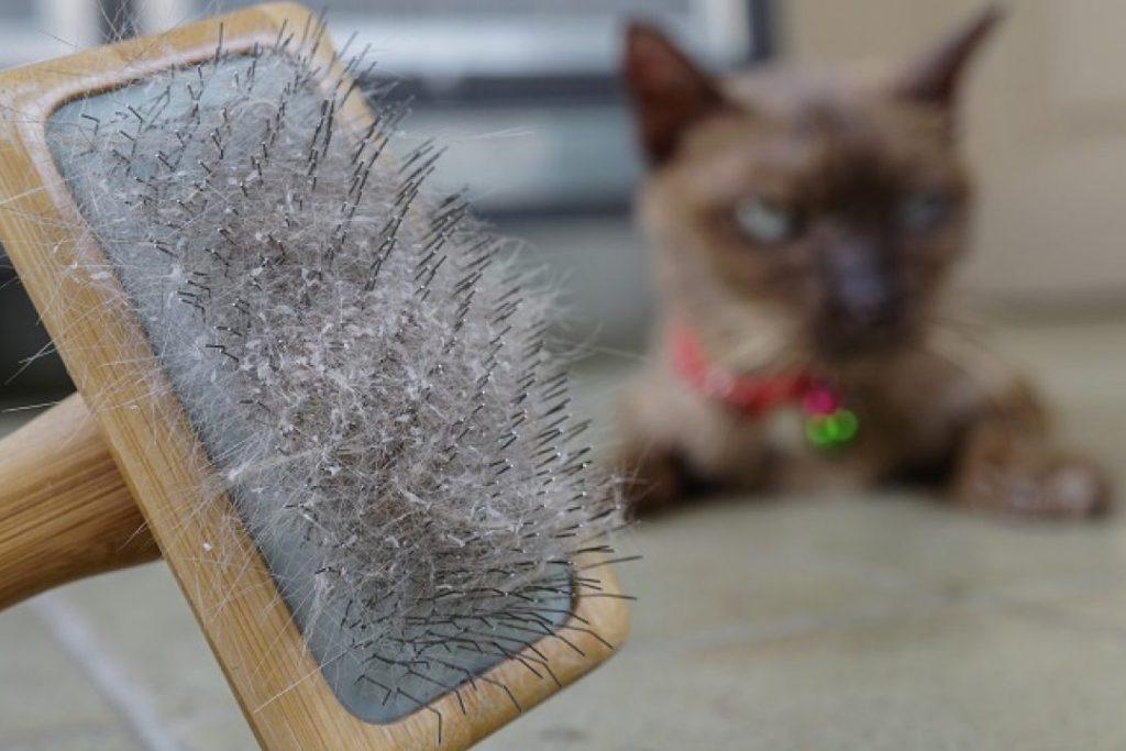 Вычёсывание шерсти у кота