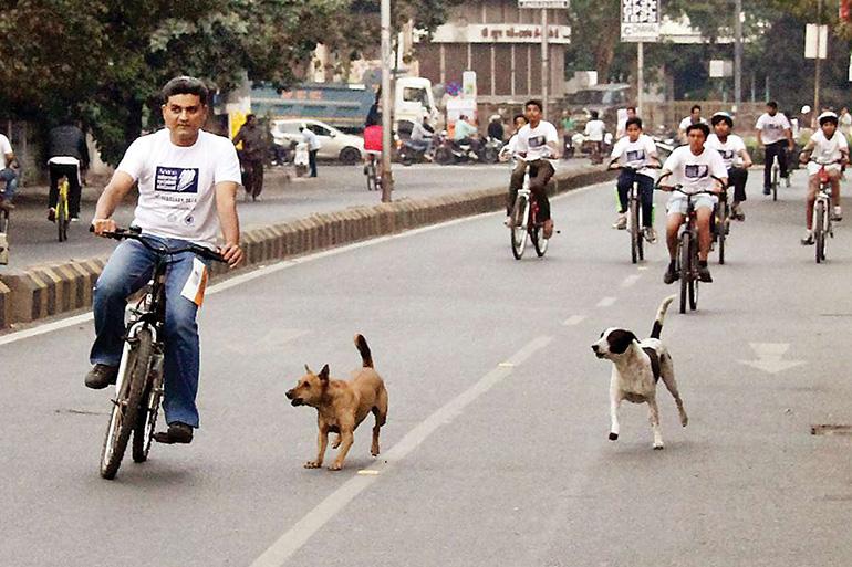 Собаки бегут за велосипедистом