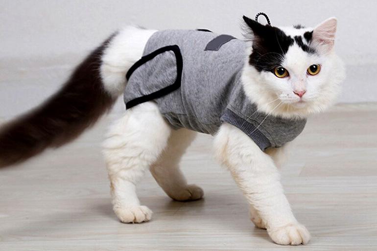 Попона для кошек на липучках