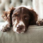 Носовое кровотечение у собаки: причины, лечение