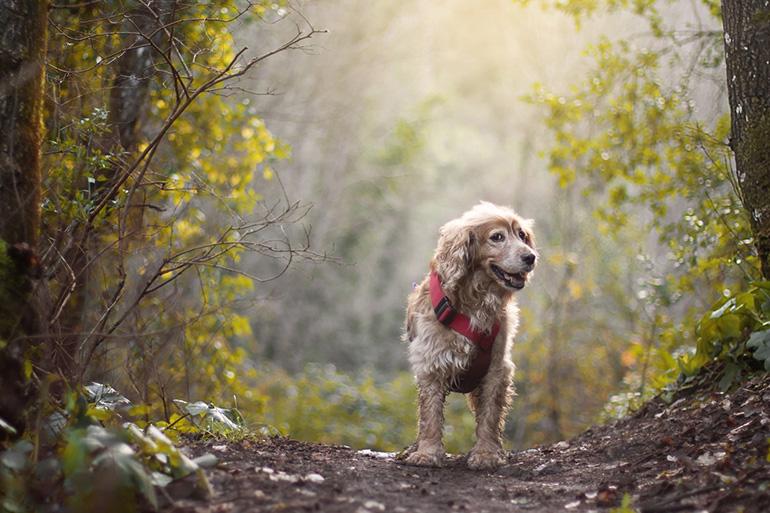Собака на тропинке