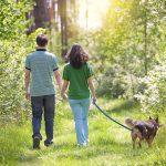 С собакой в лес: что нужно знать хозяину