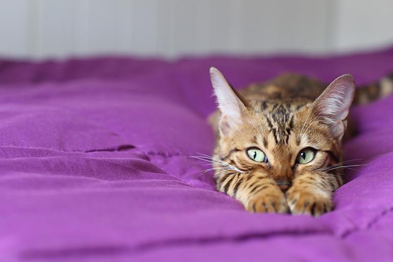 Кошка на кровати