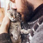 Как определить, что кошку пора усыплять