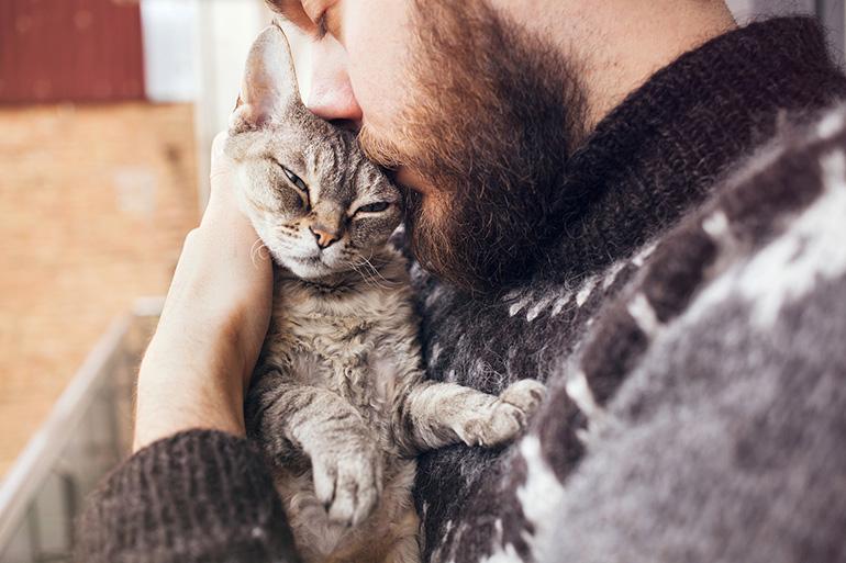 Любимый кот