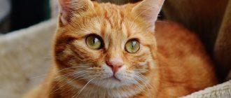 Кошка на лежанке