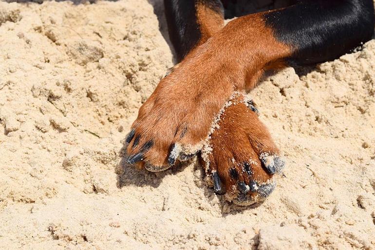 Стриженные когти собаки