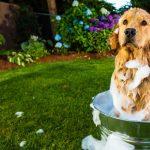 Как соблюдать оптимальный график мытья собаки?