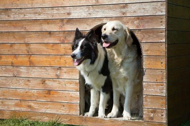 Две дружные собаки
