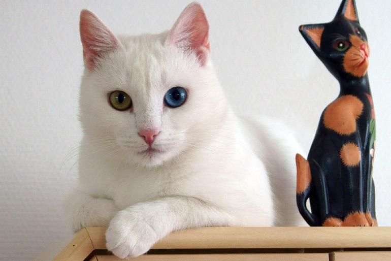 Глухая кошка