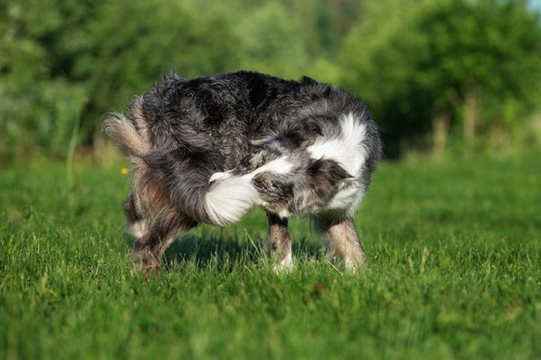Пёс бегает за хвостом
