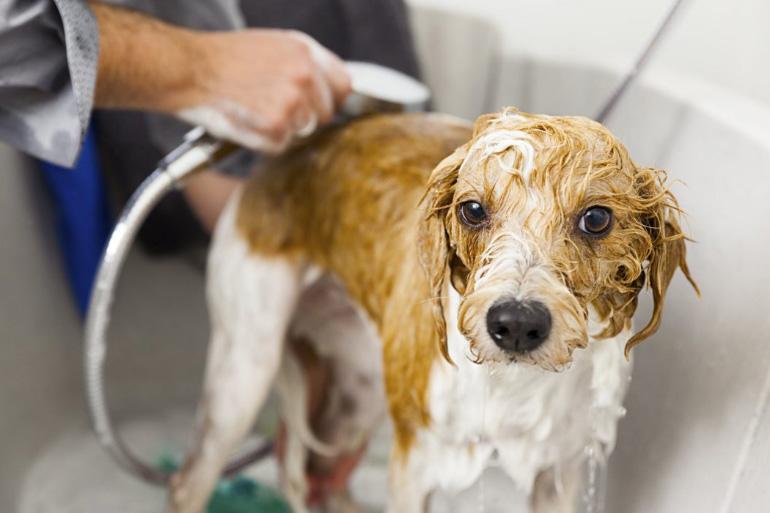 Мытьё пса