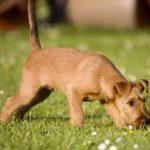 Как отучить собаку подбирать с земли на улице