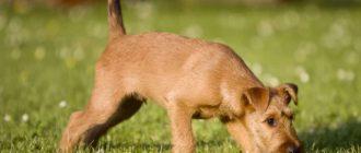 Собака что-то нашла в траве