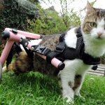 Кошки-инвалиды: как ухаживать?