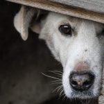 Как побороть страх собаки перед чужими людьми и местностью?