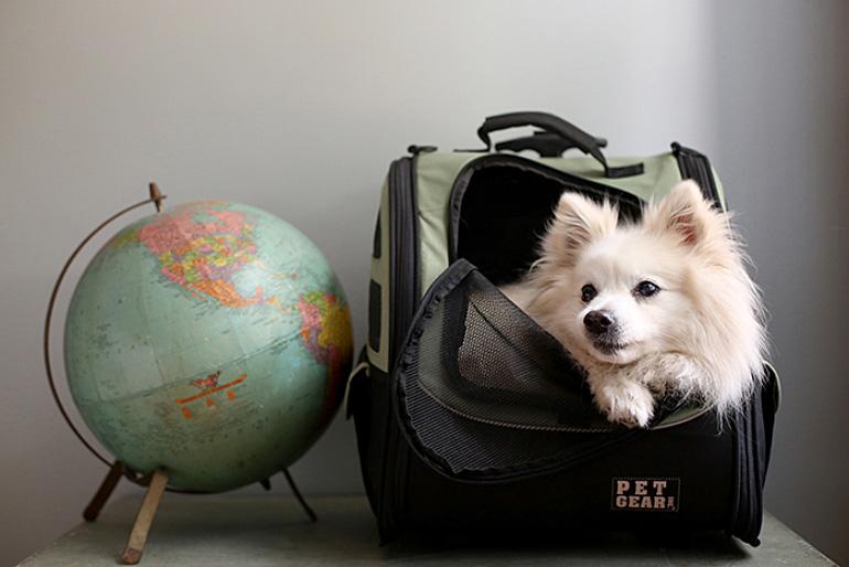 Собака собралась в путешествие