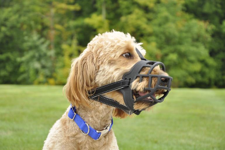 Собачий намордник