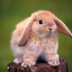 Распространённые болезни декоративных кроликов и их лечение