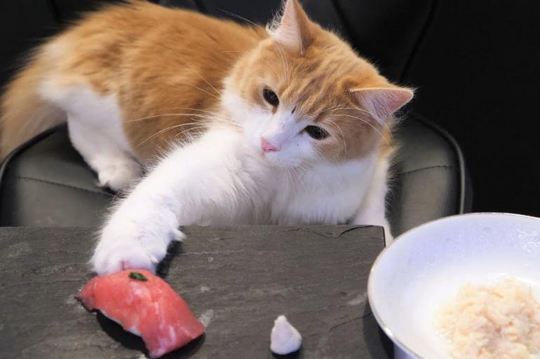 Кот с тарелкой