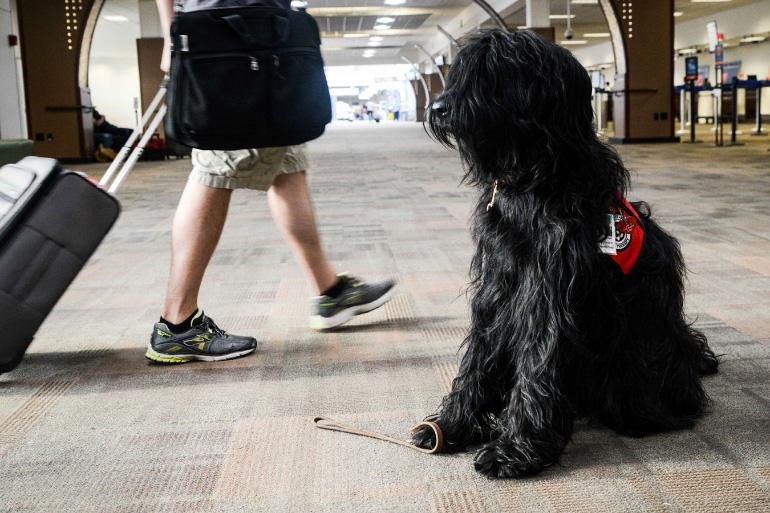 Пёс в аэропорту