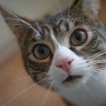 Что делать, если у кошки стул с кровью?
