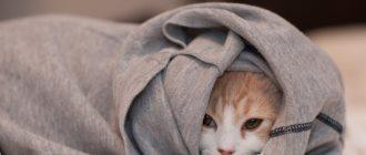 Укутанный кот